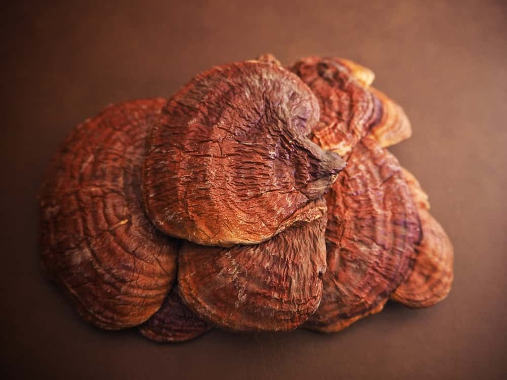 Грибы рейши — суперфуд для долголетия. Лечебные свойства, польза и вред