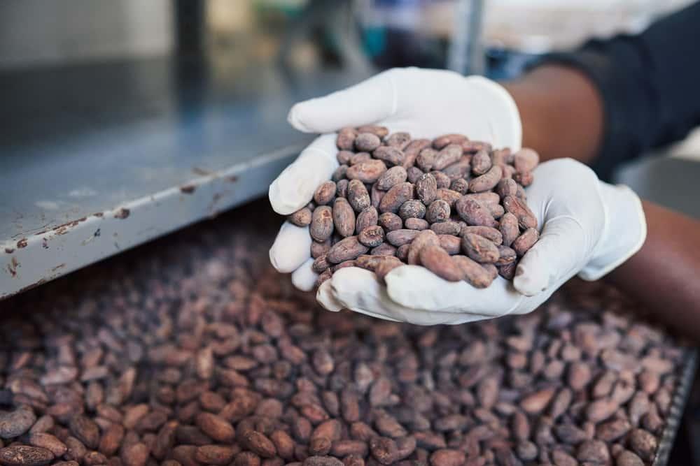 Какао - бобы - суперфуд здоровья и долголетия. В чем их польза