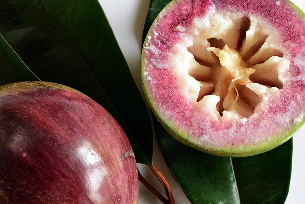 Звездное яблоко что это такое. Чем фрукт полезен. Где применяется